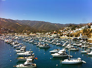 A full harbor during the Summer on Catalina Island.